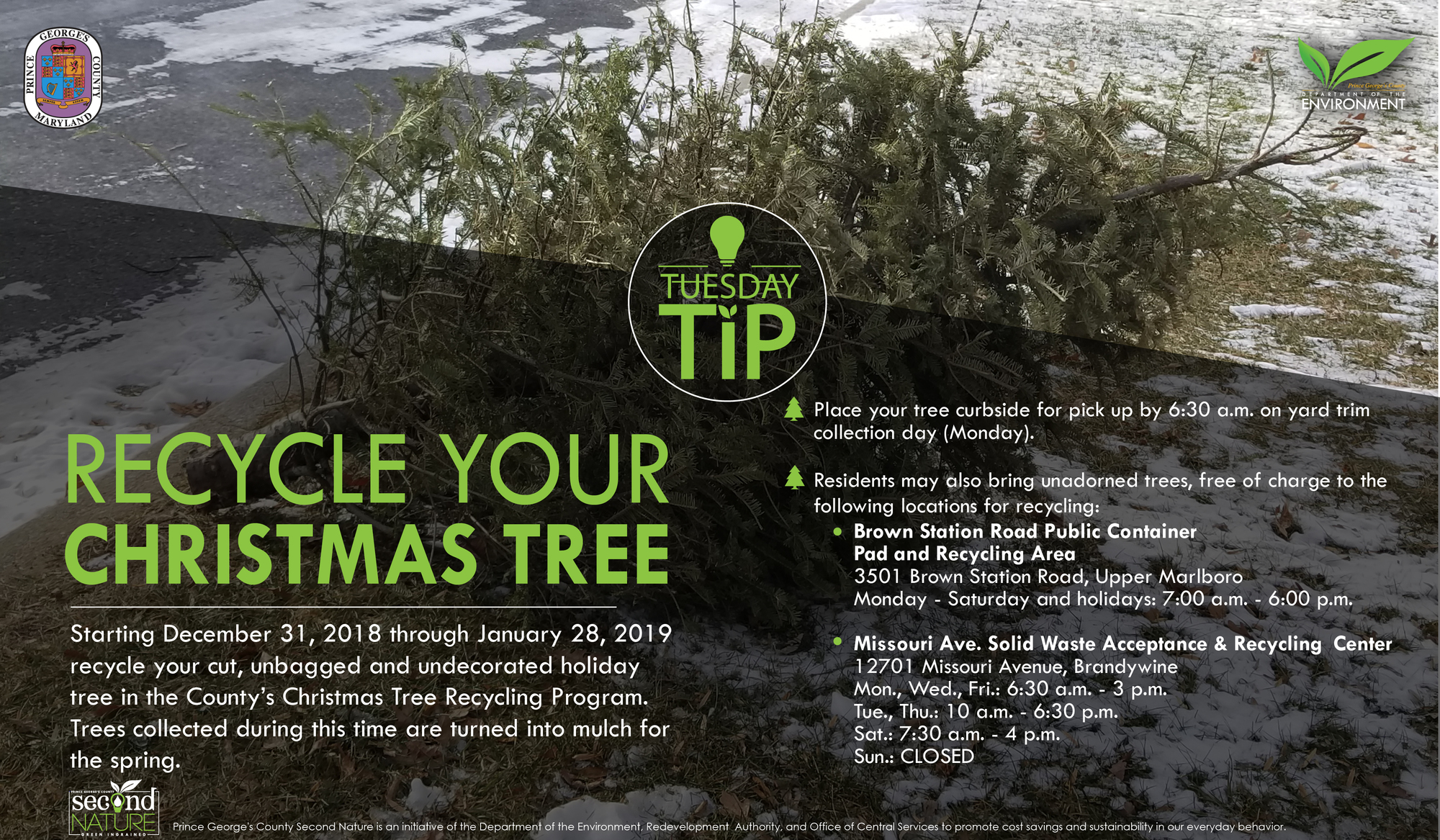 Tues Tip 12.25.18 xmas tree recycle