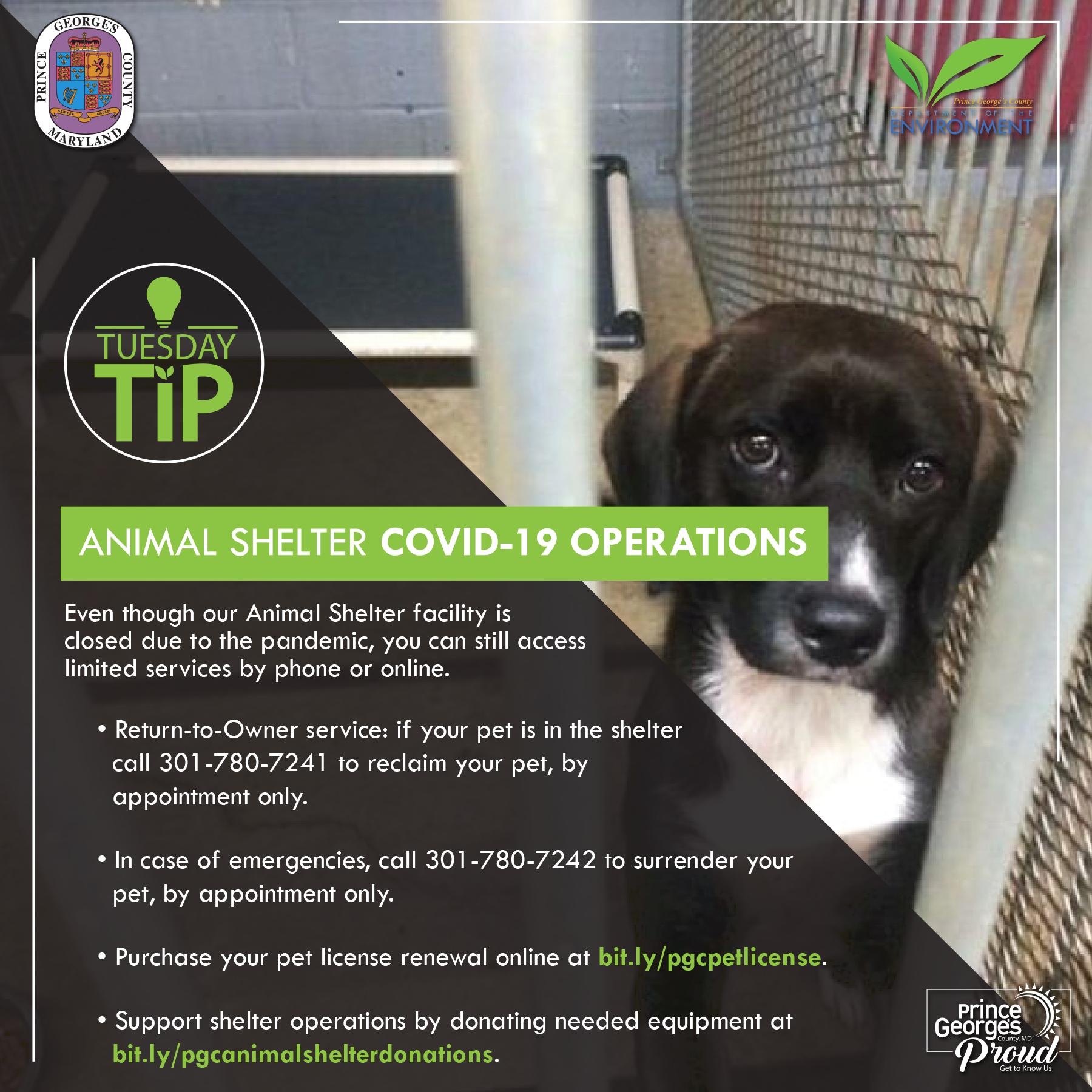 Tues tip 7.14.20 Animal shelter eng