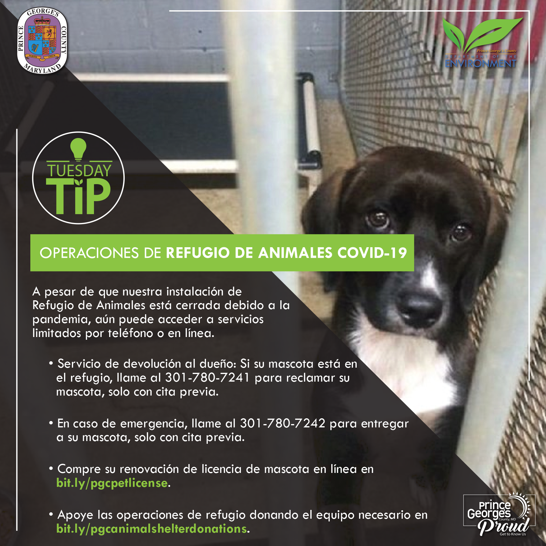 Tues tip 7.14.20 Animal shelter sp