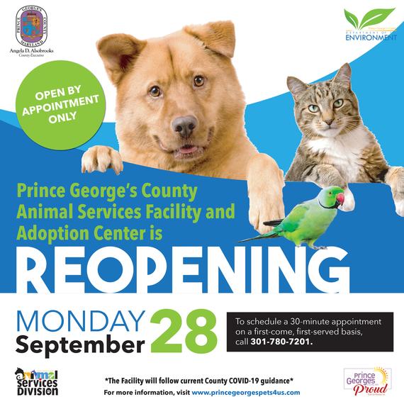 Animal Shelter Reopening
