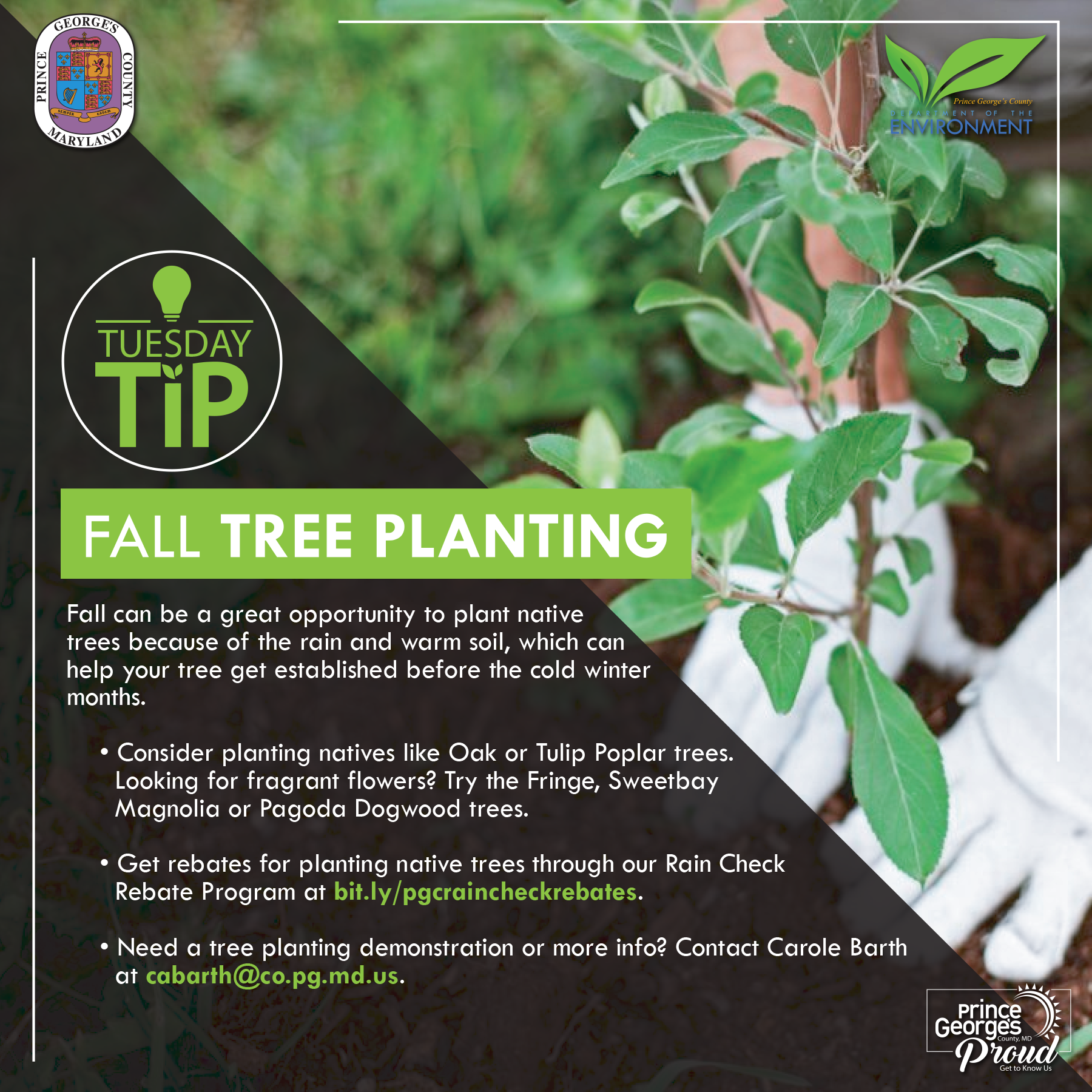Tues tip 10.20.20 Fall tree planting eng