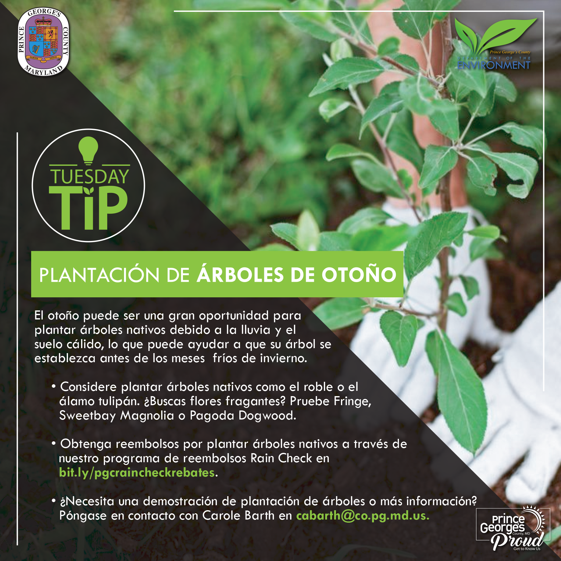 Tues tip 10.20.20 Fall tree planting sp