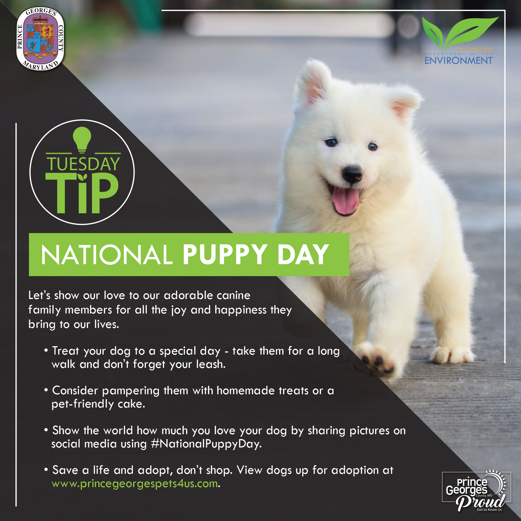 Tues Tip 3.23.21 Puppy day eng