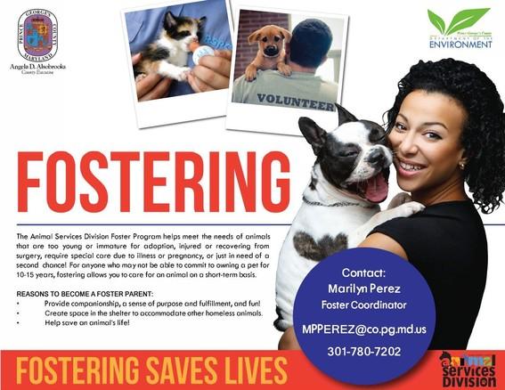 Fostering animals