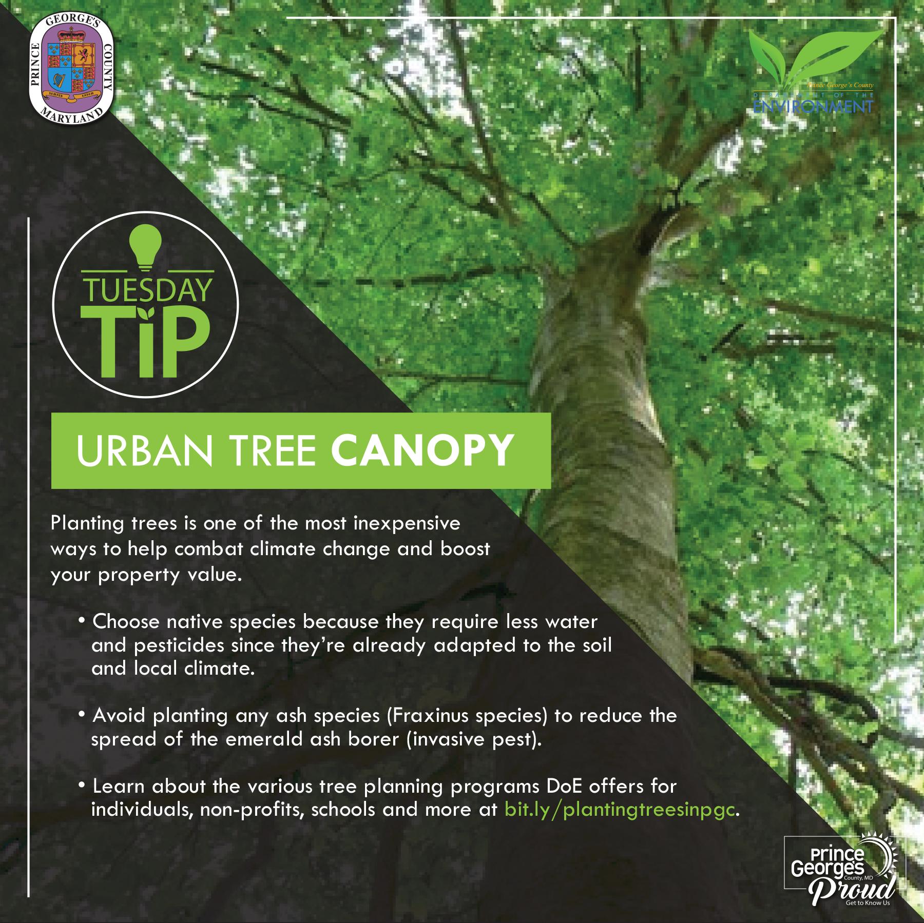 Tues Tip 4.27.21 TreeCanopy eng