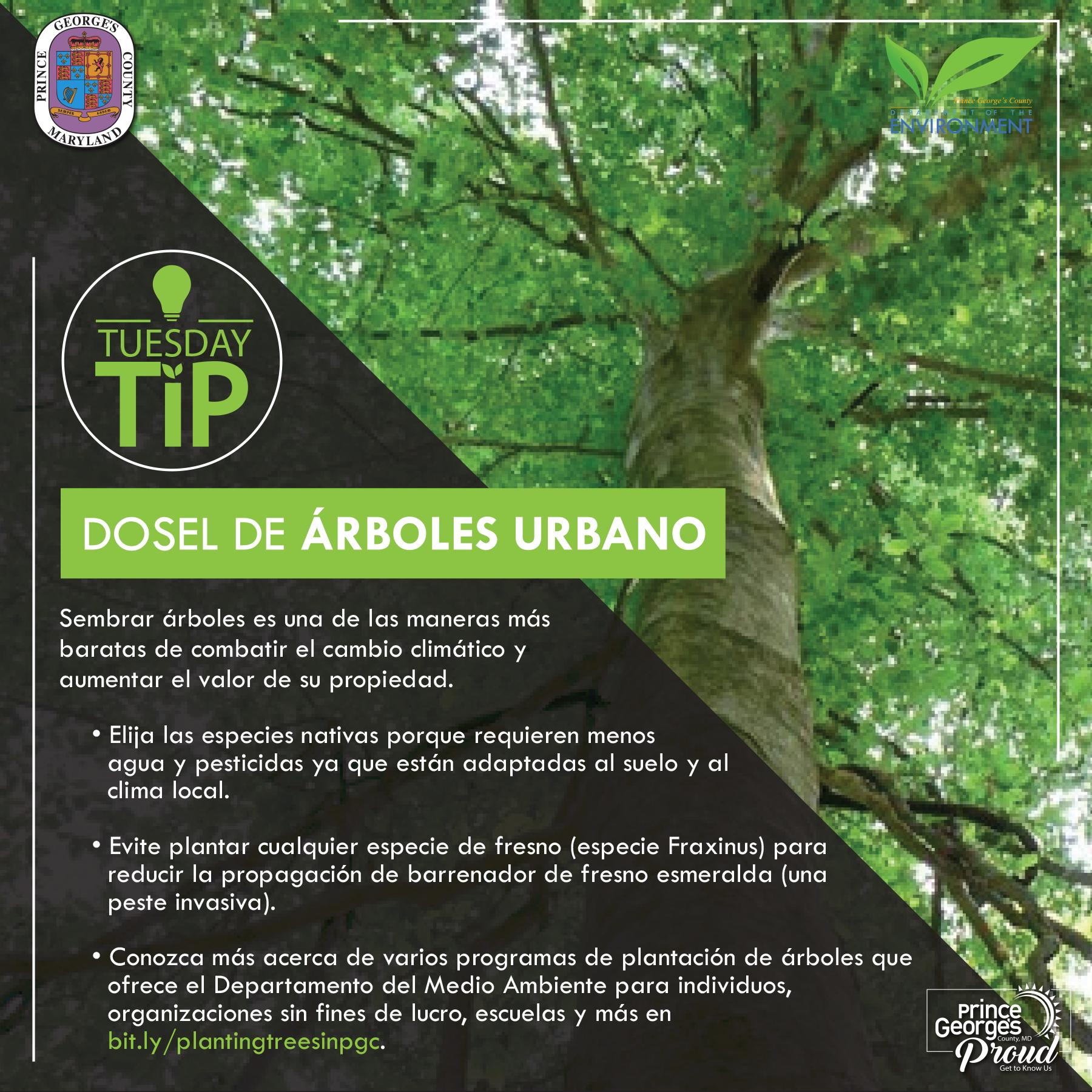 Tues Tip 4.27.21 TreeCanopy sp