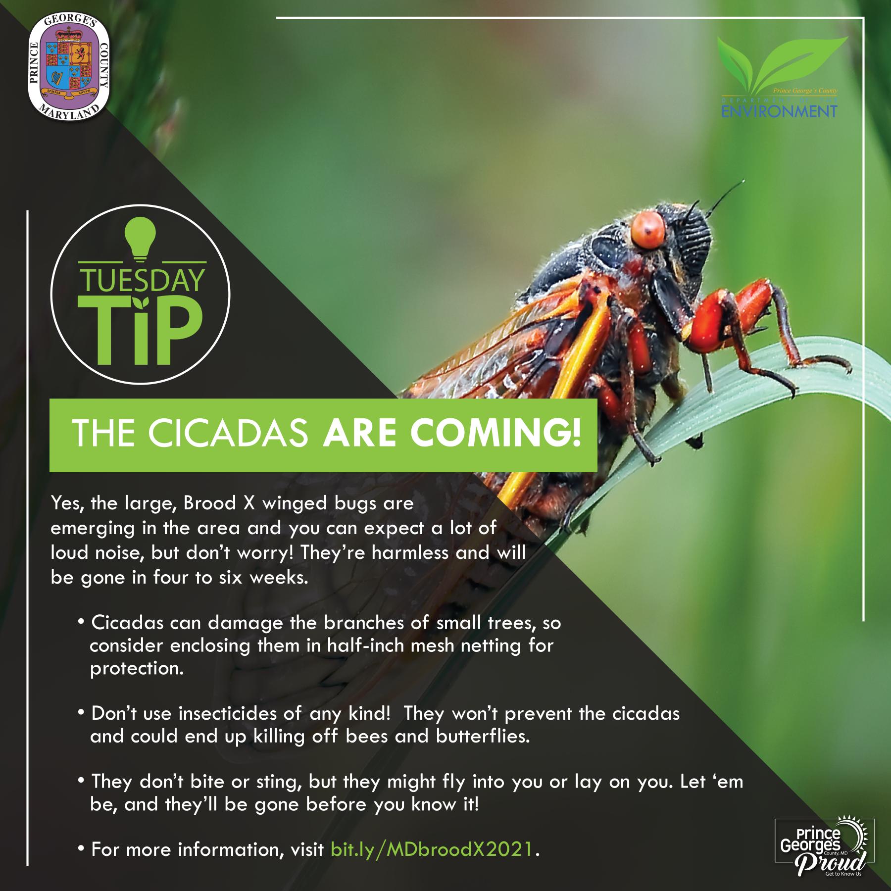 Tues Tip 5.18.21 Cicadas eng