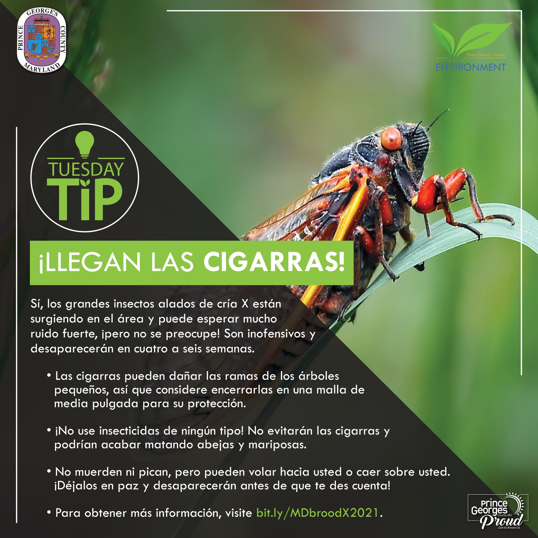 Tues Tip 5.18.21 Cicadas SP