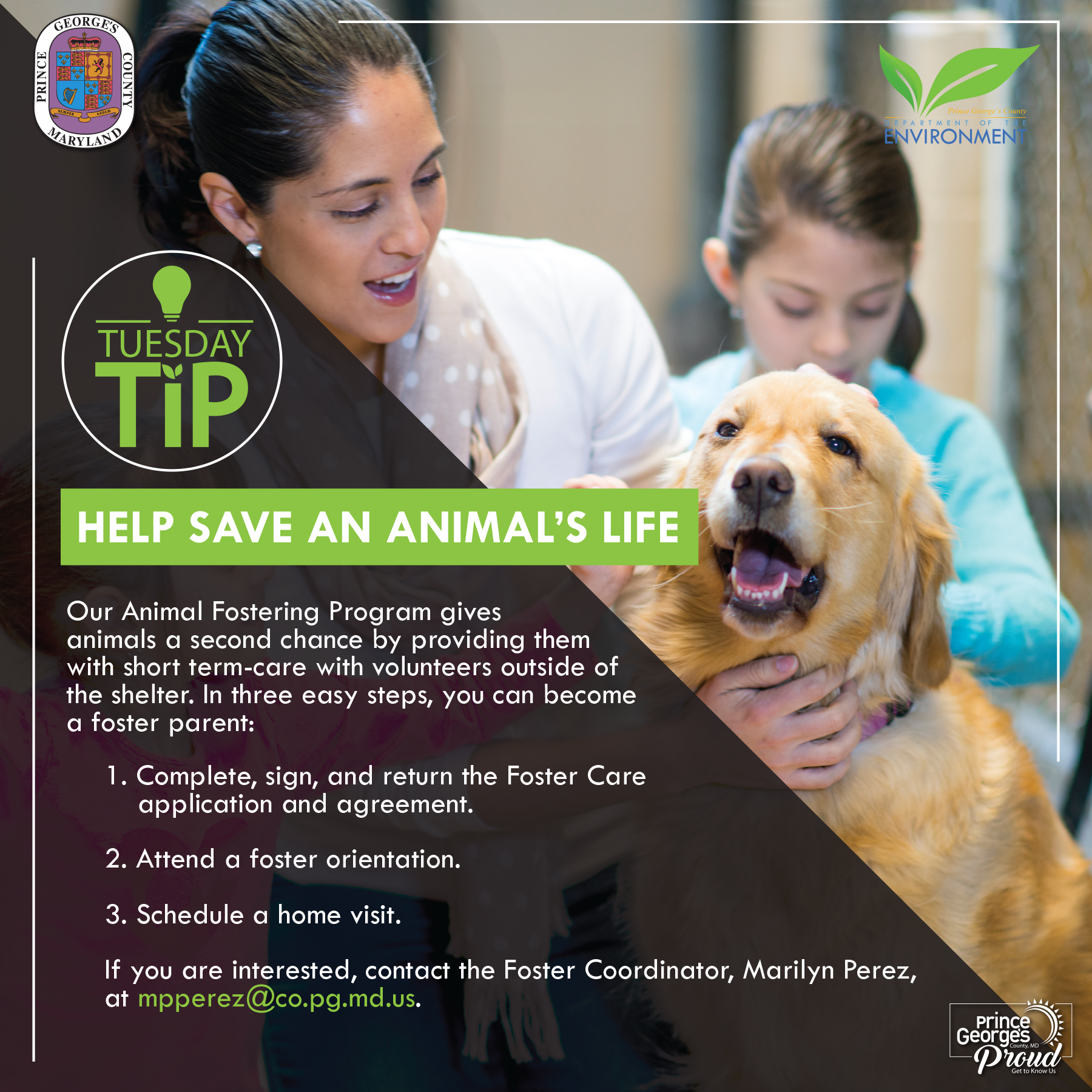 Tues tip 8.10 foster animal eng