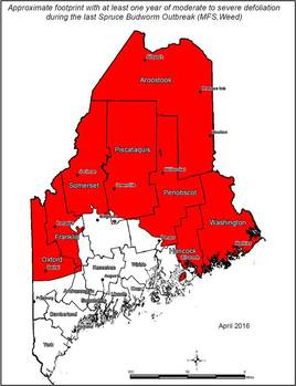 Map of area affected by moderate to severe defoliation in the last spruce budworm outbreak