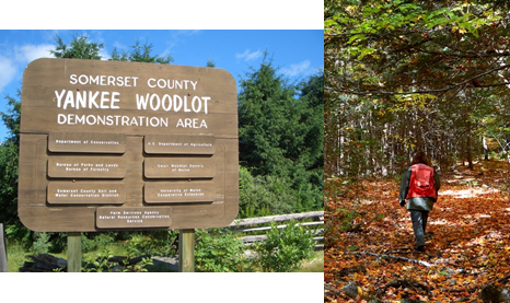 Somerset County Yankee Woodlot Demo Area