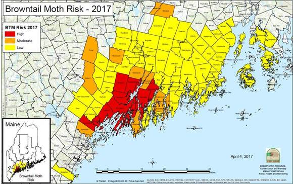 2017 Browntail Moth Maine Risk Map
