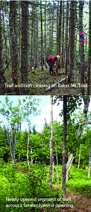 person clearing new trail section and an after-clearing view