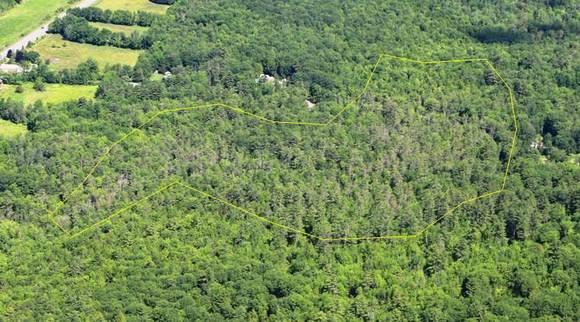 White pine needle damage aerial image (MFS)