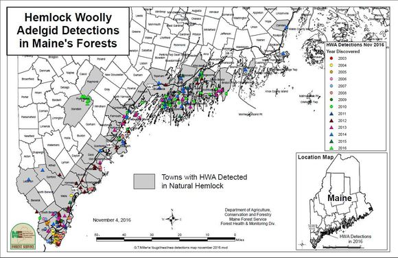 hemlock woolly adelgid detections in Maine's Forests