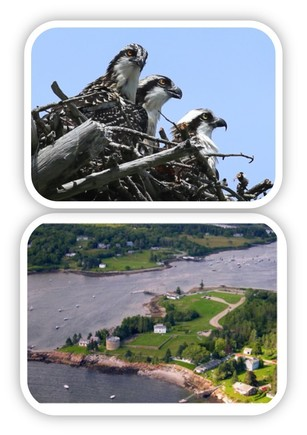 osprey on nest at Wolfe's Neck Woods State Park, and Colonial Pemaquid State Historic Site from above.