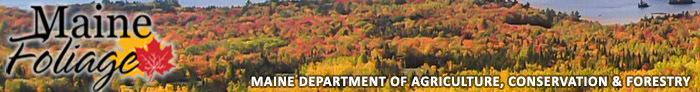 Fall Foliage Heading