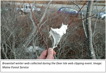Deer Isle Web