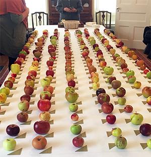 Bunker apple tasting