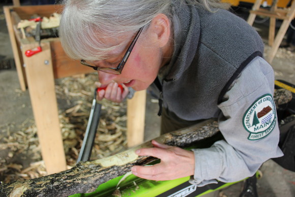 Maine Forest Service Entomologist Colleen Teerling examines an ash sample with evidence of emerald ash borer attack.