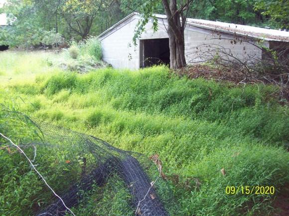 stilt grass