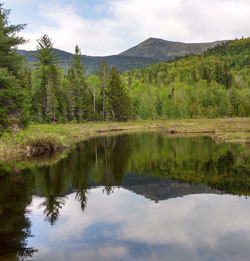 Wetland with woods and mountain in background. Bigelow Public Land, Maine.