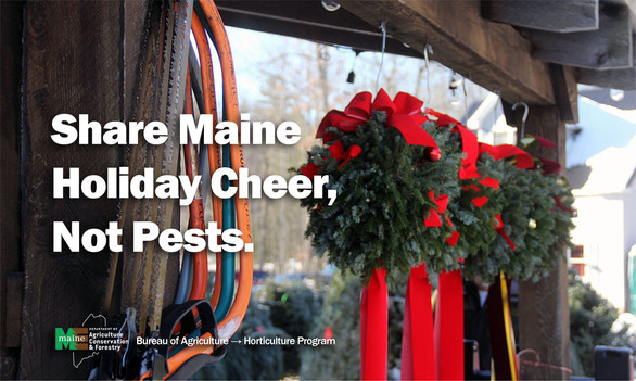 Share Maine Cheer, Not Pests