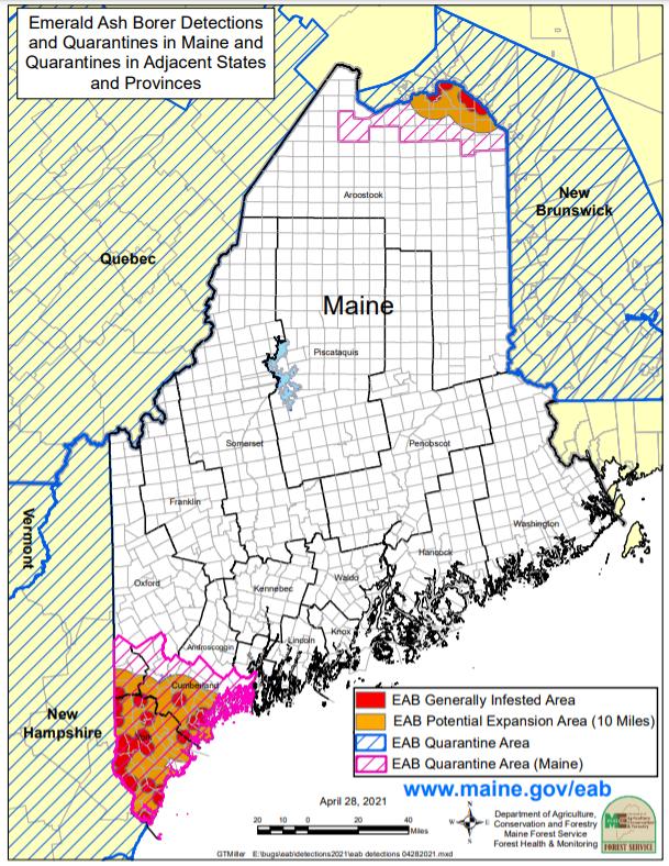 Emerald ash borer quarantine in Maine 2021