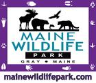 Maine Wildlife Park Grey Maine