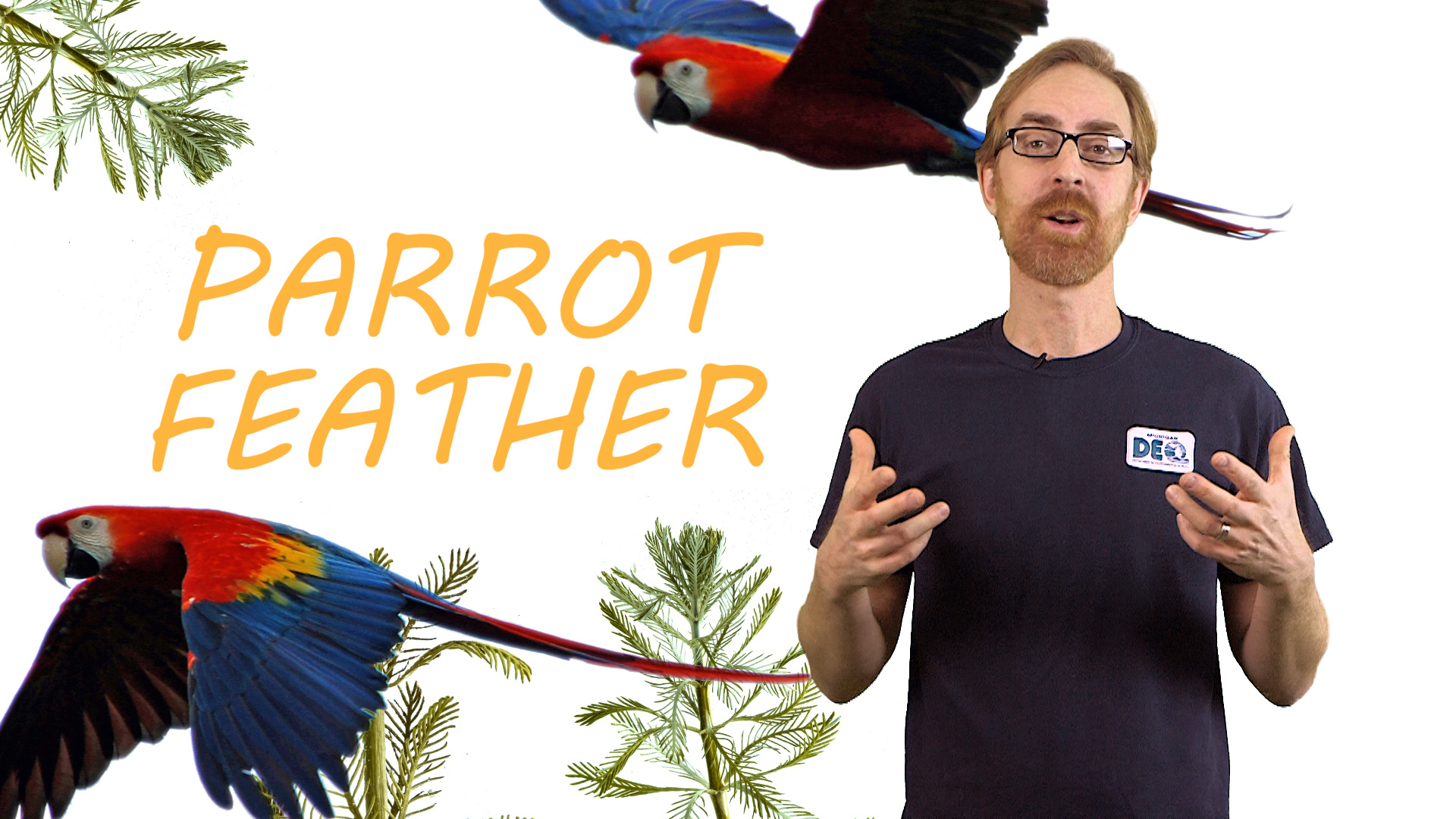 Parrot feather video