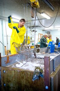 Employee pushing fish through the egg-take process at Little Manistee River Weir