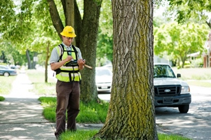 An arborist collecting tree data in Detroit