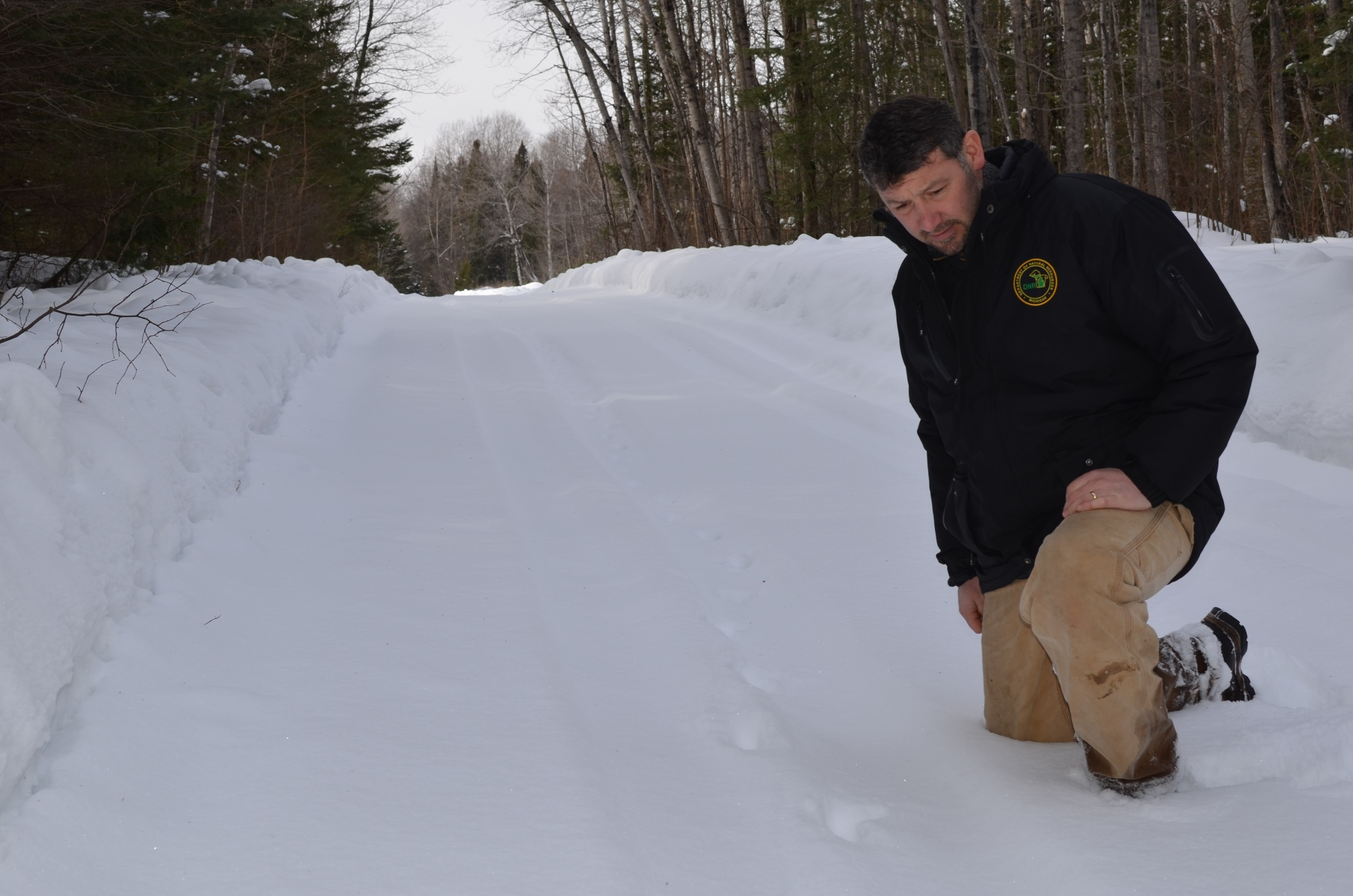 Kevin Swanson, a wildlife management specialist with the DNR's bear and wolf program, inspects a set of coyote tracks on a back road in northern Delta