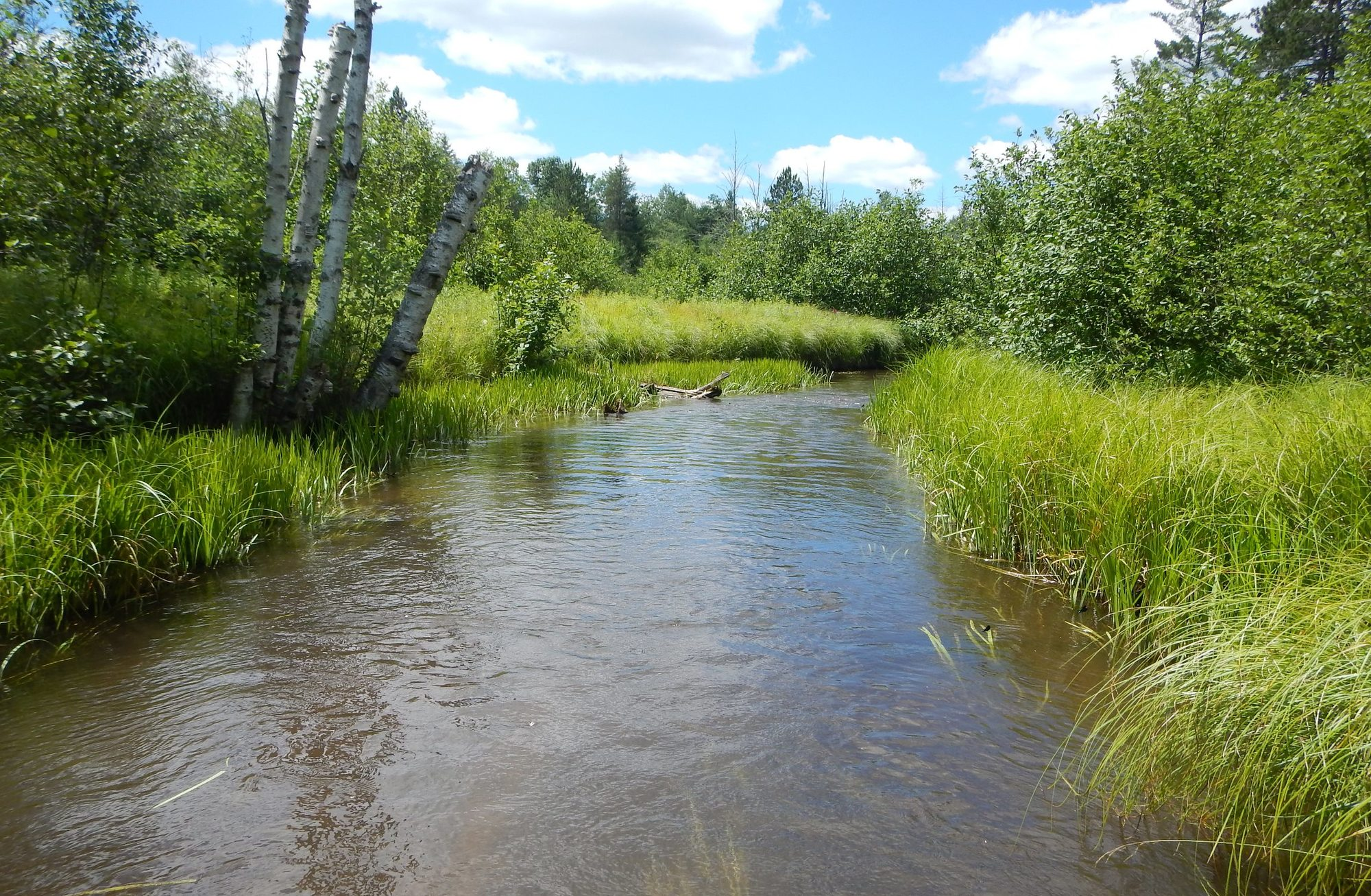 Dnr spring cleaning for streams beneficial to fish habitat for Fish and stream