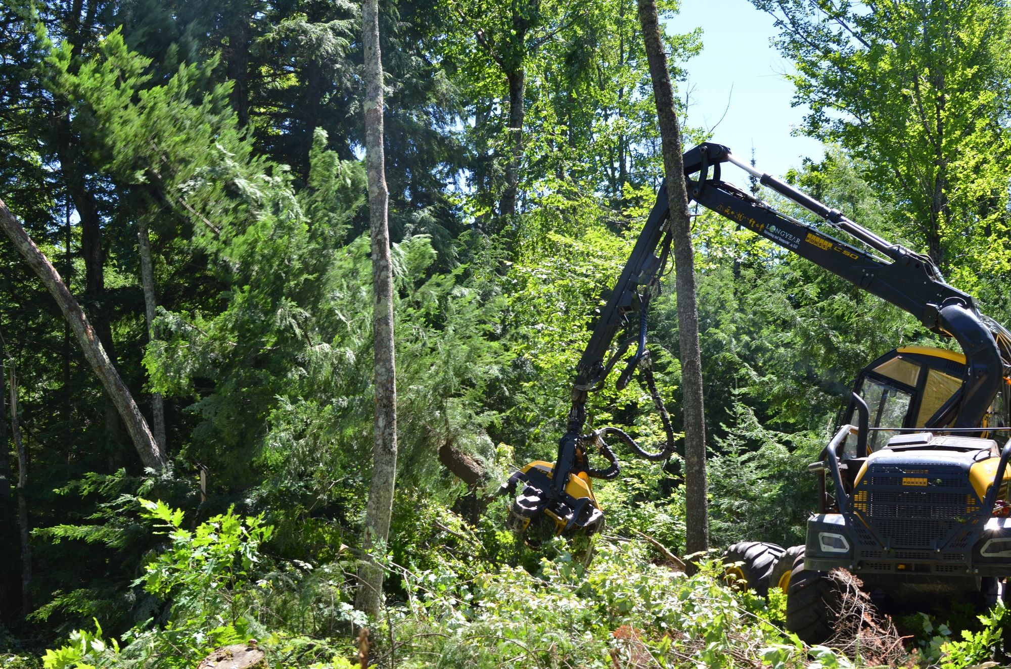 Loggers from J.M. Longyear LLC in Marquette work to remove trees from the Emily Lake State Forest Campground in Houghton County.