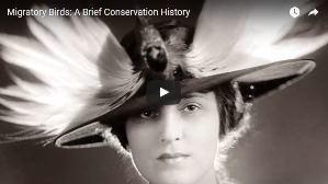 still from U.S. Fish and Wildlife Service bird conservation video