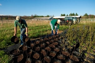 Volunteers carrying potted trees outside