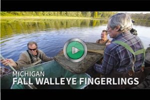 walleye stocking video thumbnail