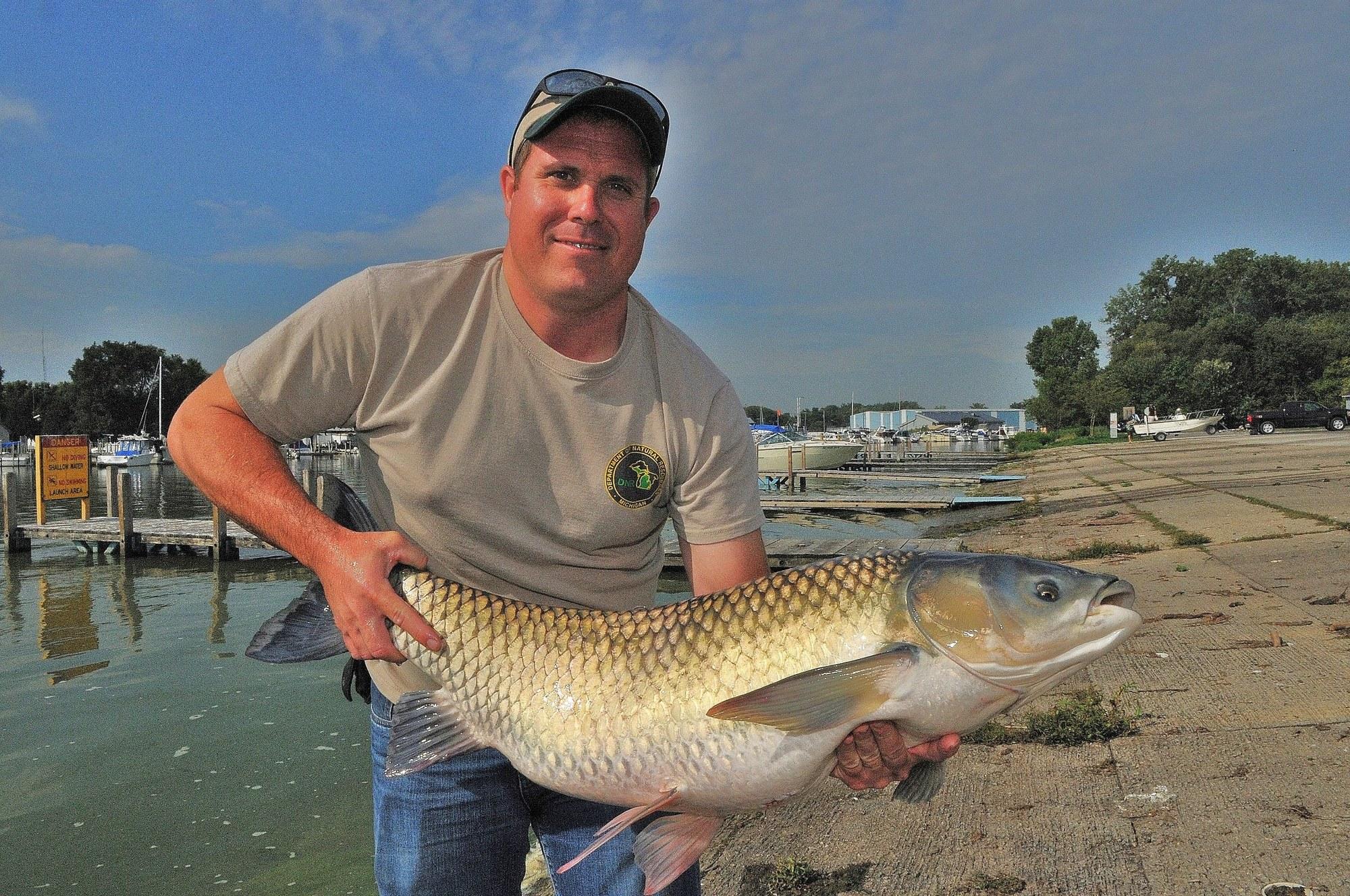 Michigan Department of Natural Resources fisheries biologist Cleyo Harris displays a Lake Erie grass carp.