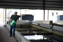 Employee feeding fish at Thompson State Fish Hatchery