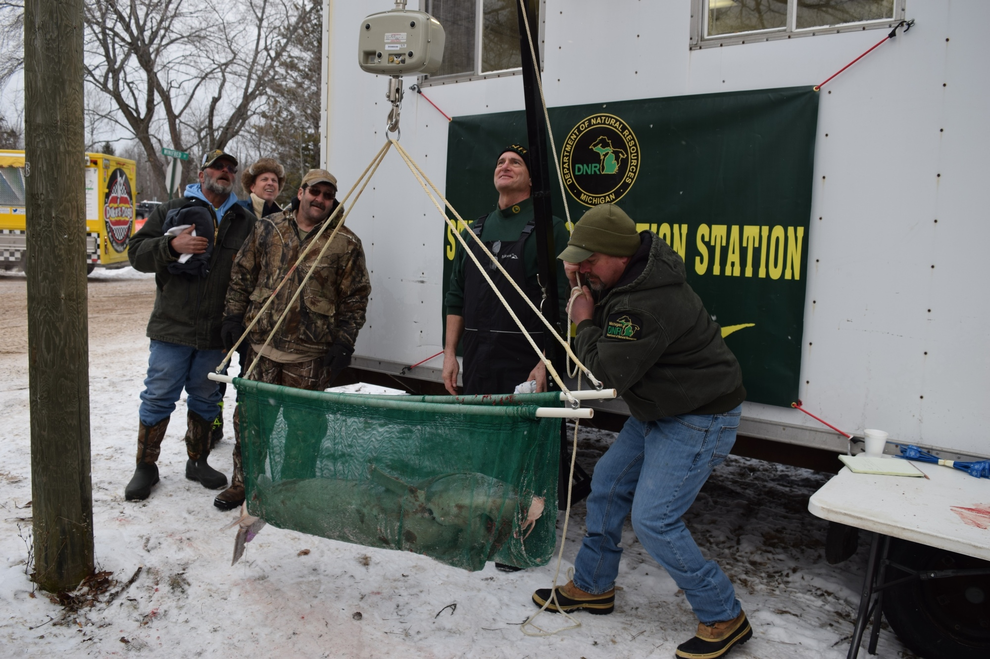 DNR sturgeon researcher Ed Baker reads the weight, as DNR fisheries biologist Tim Cwalinski hoists a sturgeon on the scale.