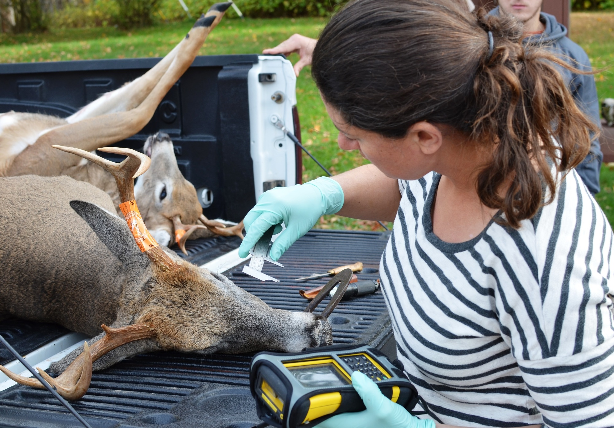 Erin Largent, a DNR research technician, checks a deer at the DNR Customer Service Center in Marquette.