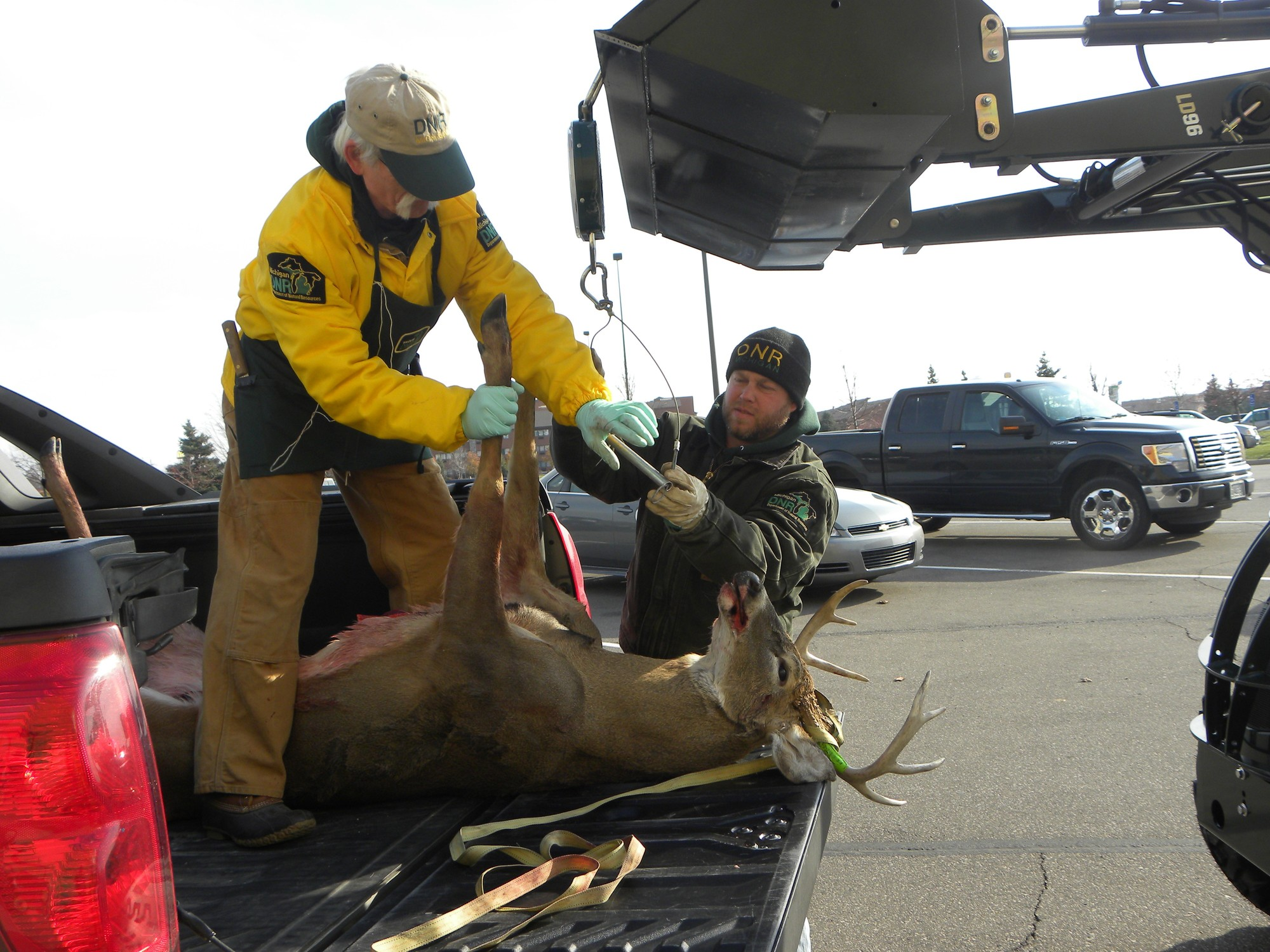 Tom and Zach Cooley working to get a white-tailed deer out of a truck bed.