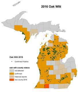 map showing Michigan counties affected with oak wilt, 2016