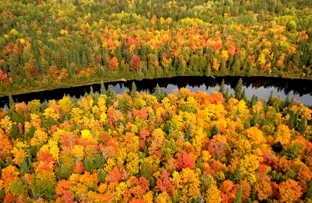 Aerial view of Tahquamenon River and surrounding fall forest