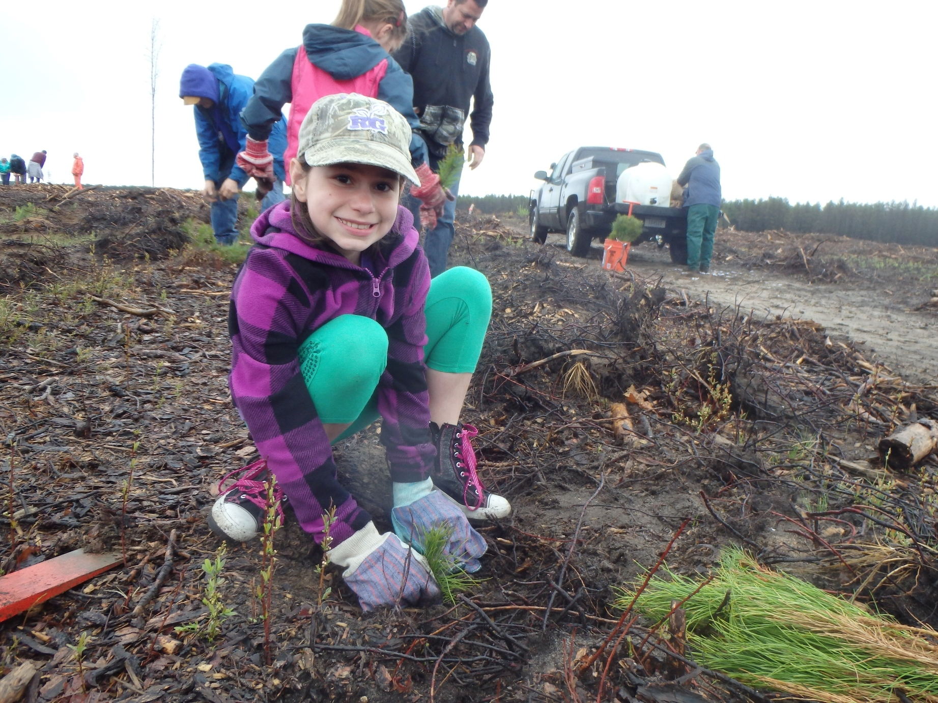 Volunteers plant 2-3 acres of jack pines every year to further the recovery of the Kirtland's warbler by creating habitat.