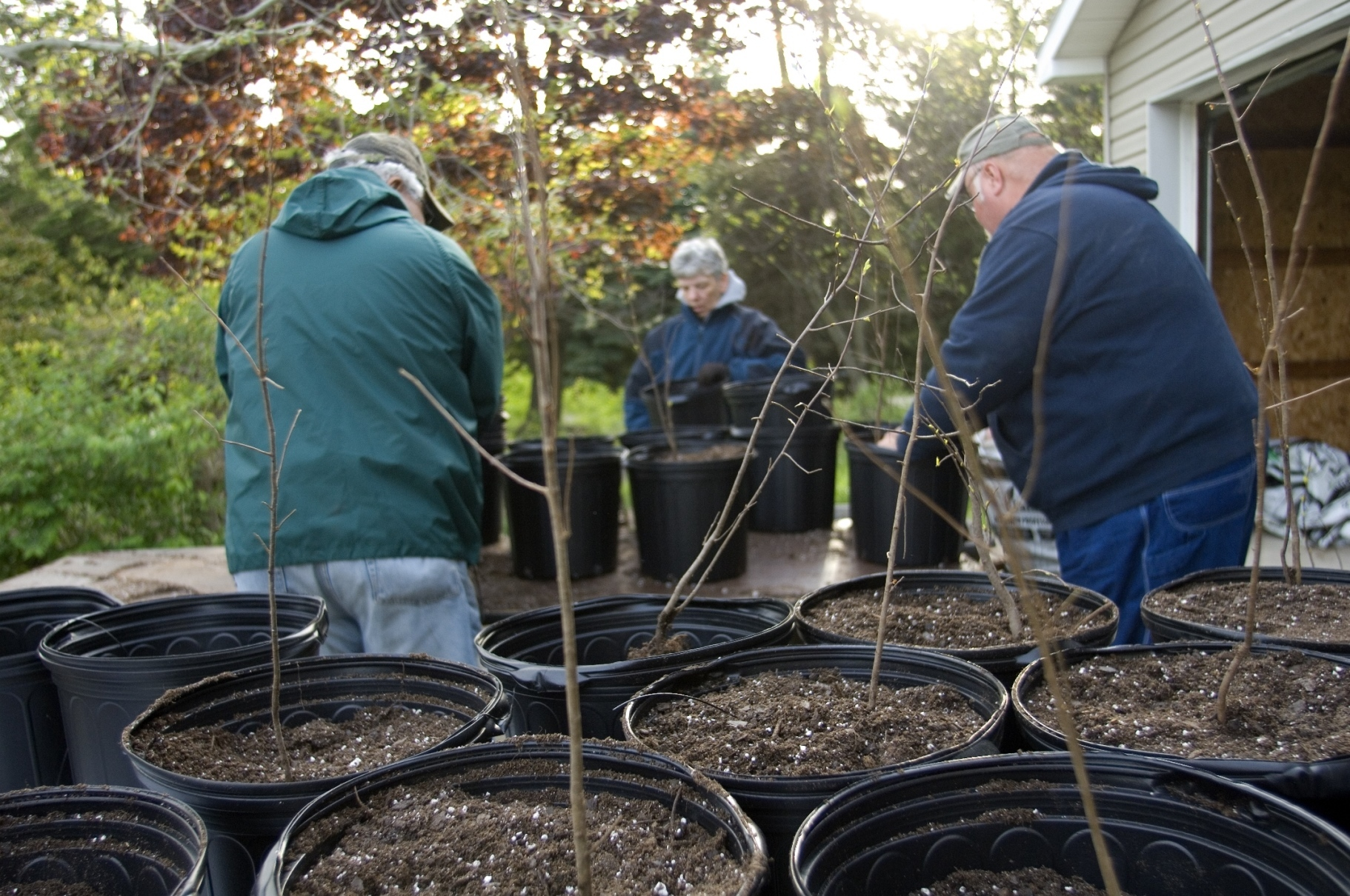 volunteers repot shrubs for turkey habitat project