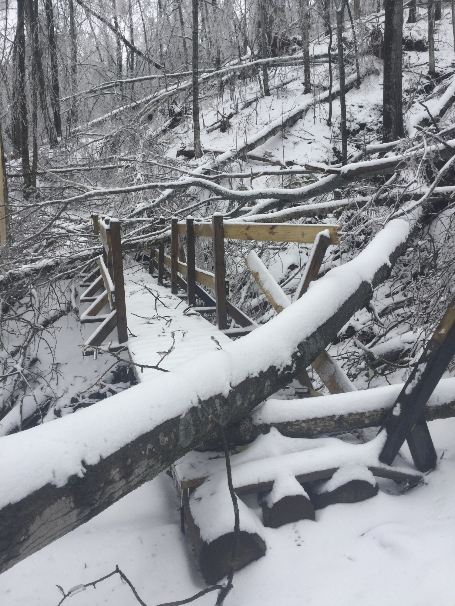 A bridge damaged by fallen trees at Porcupine Mountains Wilderness State Park is shown.
