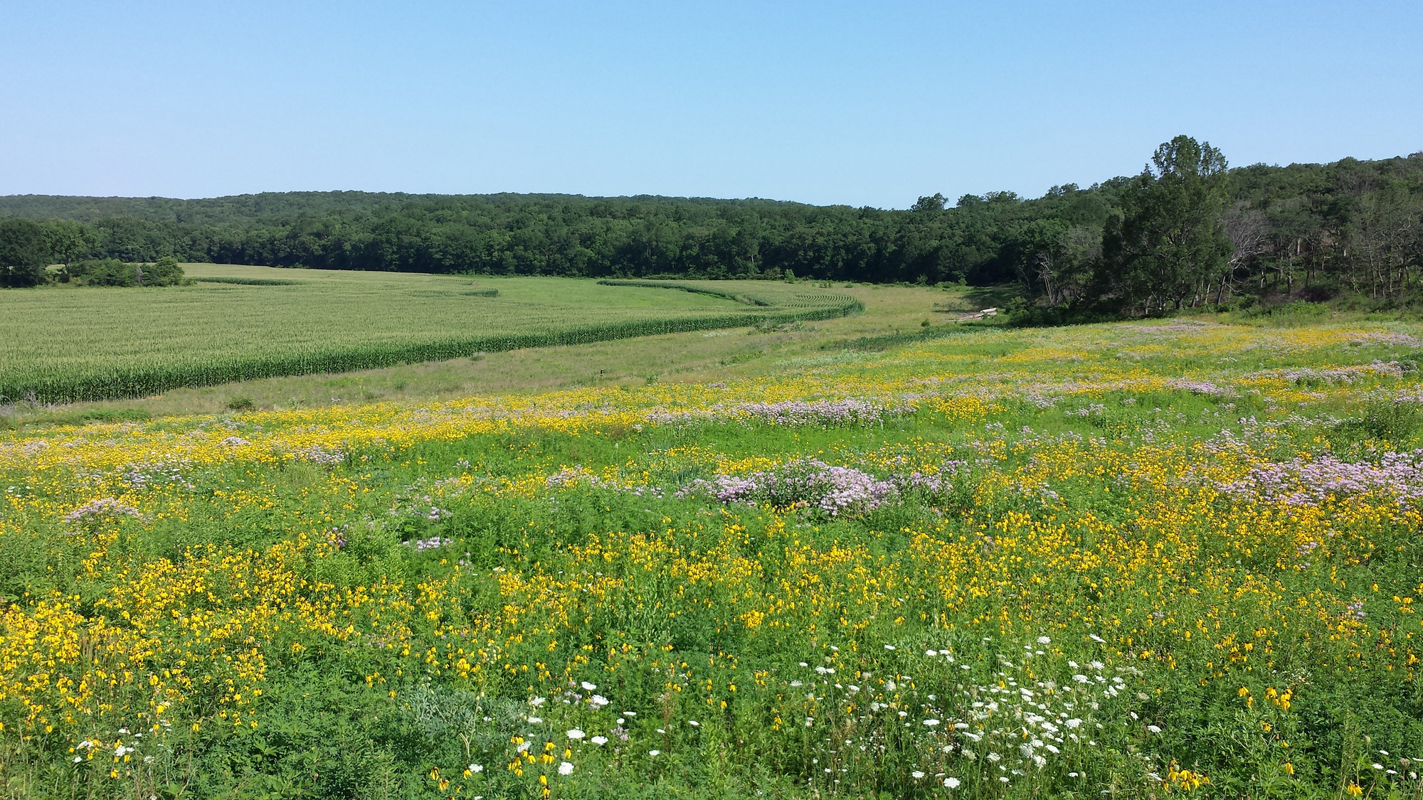 Grasslands planted along agricultural fields can keep runoff out of waterways.