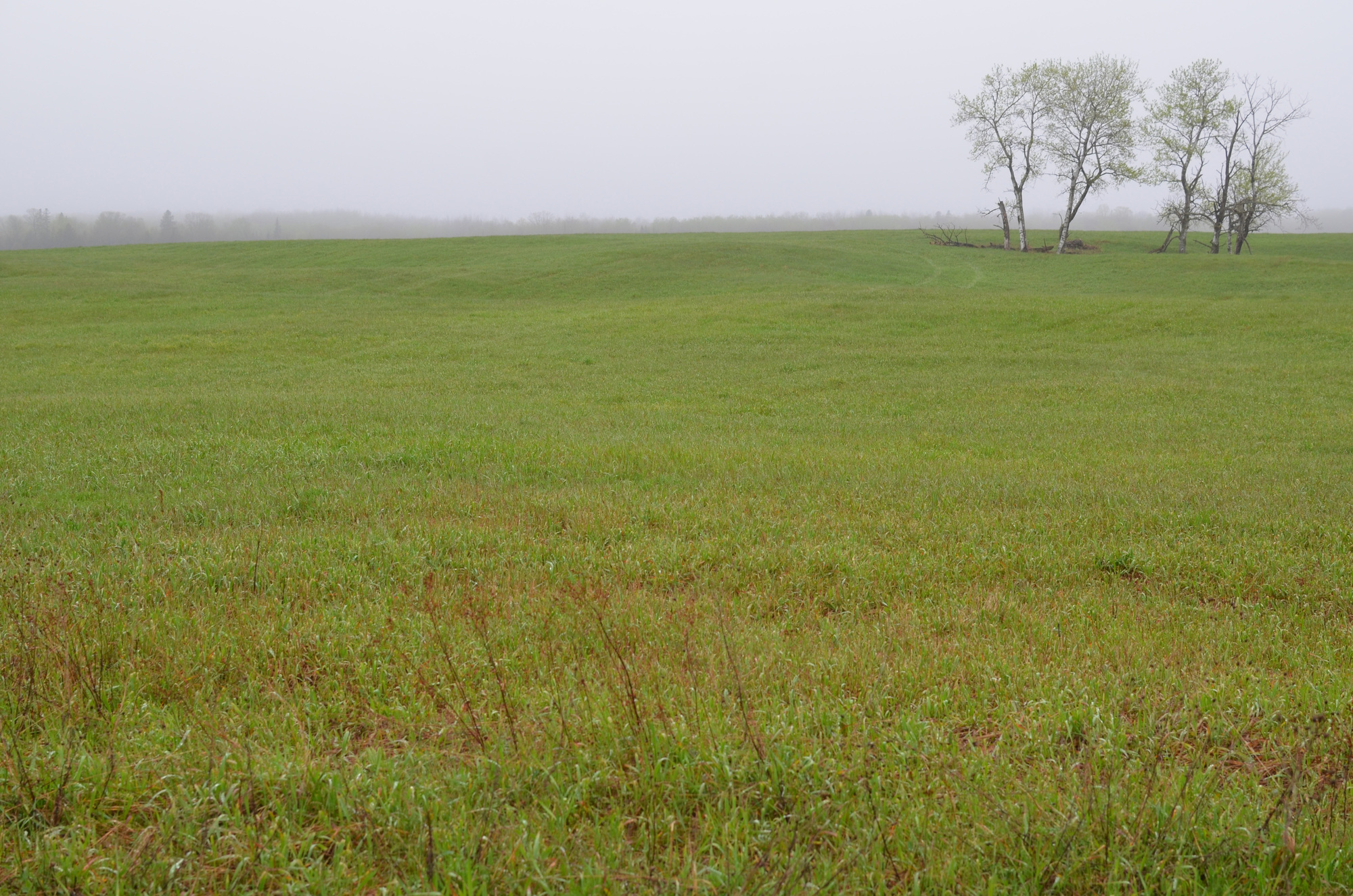 A sweeping vista along a Michigan grassland.